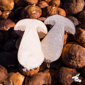 Funghi porcini freschi tagliati